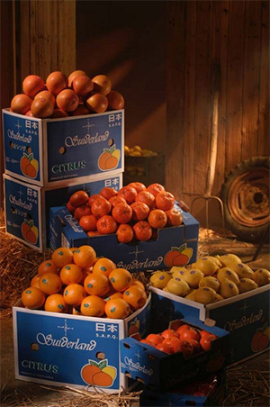 packing-citrus